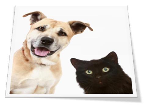 Kinrades Pharmacy Isle Of Man Veterinary Prescriptions